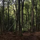 Sentiero econarrante